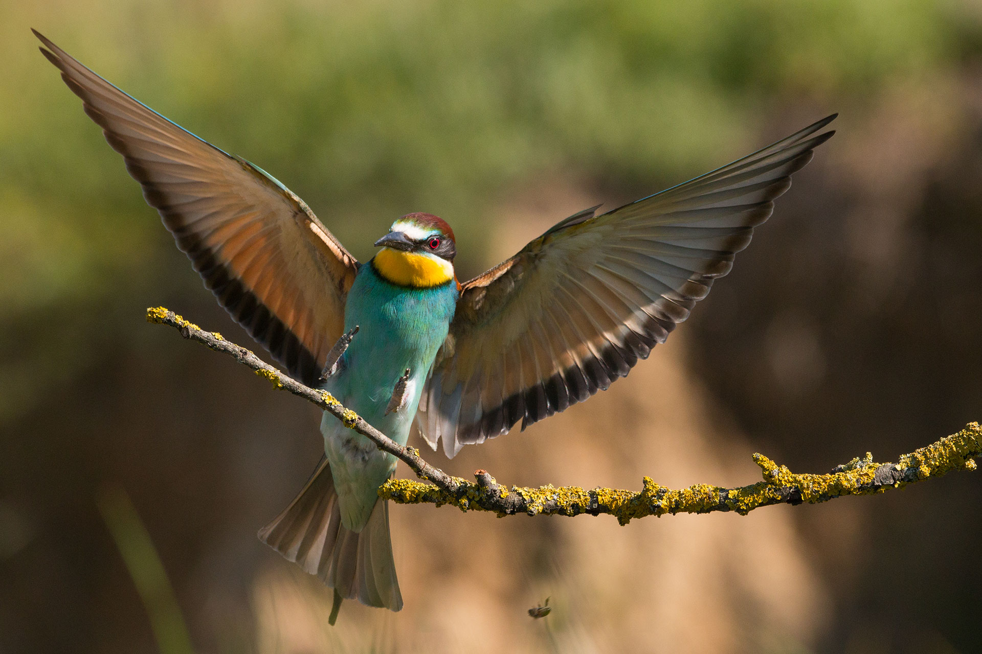 Bee eaters bird hide photography