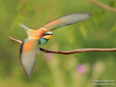 Roller and Bee-eater photography trip under way