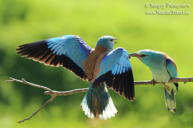 RichS Backyard Birds : Nature Tours, Spring bird hide photography tours and workshops in