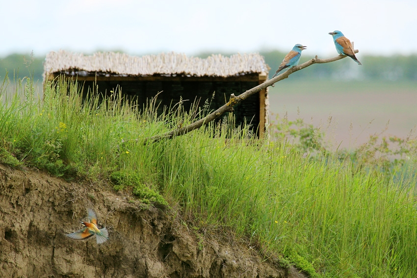Bee-eater hide, Front view of the hide, Author: Sergey Panayotov © 2012