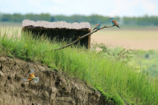 Front view of the hide, Author: Sergey Panayotov © 2012