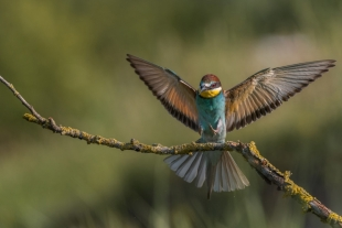 Bee-eater Hide photography