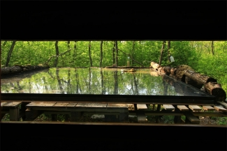Forest bird photo hide