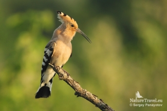 Hoopoe Photography Bulgaria, Photo Tower hide