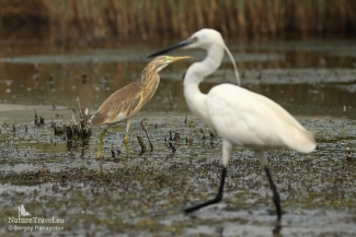 Little Egret Hide photography