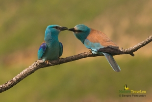 Roller Hide photography