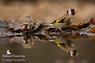 Goldfinch Hide photography