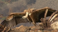 Amazing landscapes and Vultures